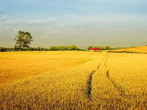 Arable Land Insurance