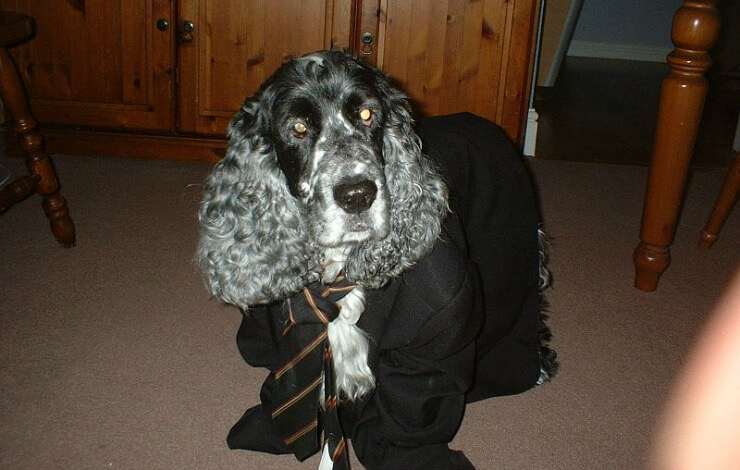 Business Dog Wearing Suit