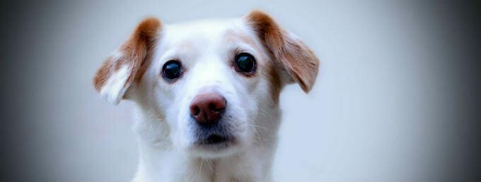 Dog Tenancy Agreement