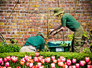Public Liability Insurance for Gardeners