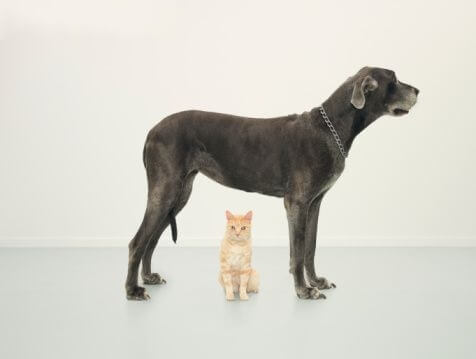 Are Pets Covered on a UK Landlord Insurance Policy ...