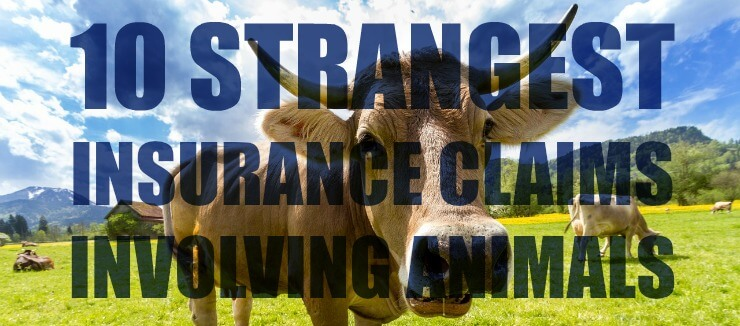 Strange Insurance Claims With Animals